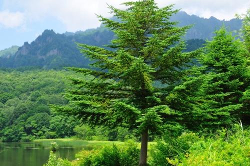 MSMは針葉樹由来の有機イオウ成分